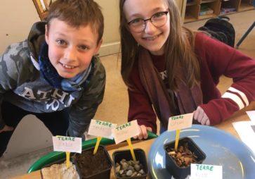 Les 4P étudient la germination.